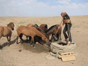 Rensina watering horses in Mongolia
